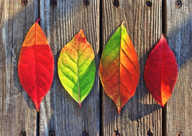 changing leaves to represent voice over age